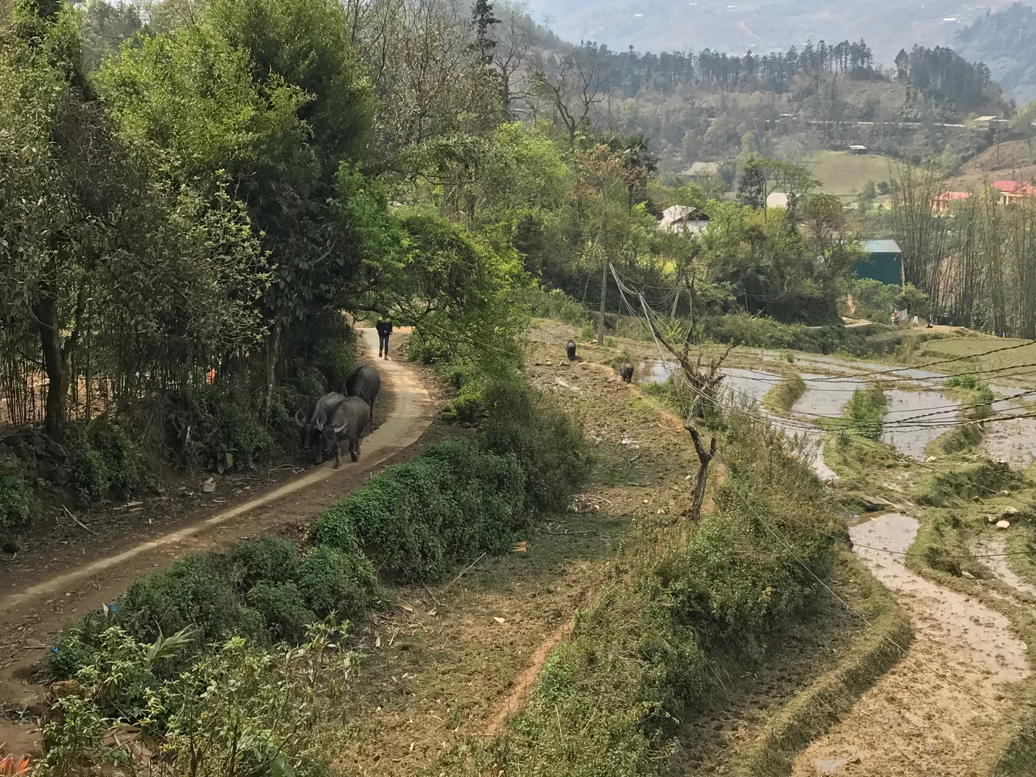 "Projet ""Cochons"" à Ta Phin"