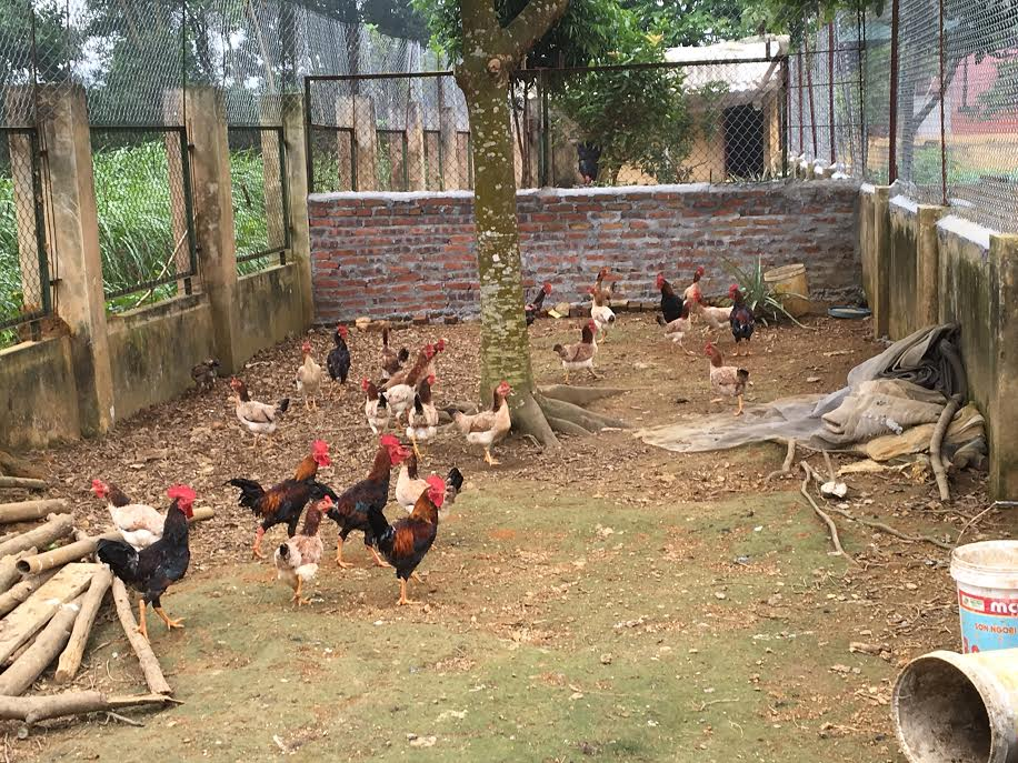 Aides l orphelinat de ba vi enfance partenariat for Duree de vie des poules pondeuses